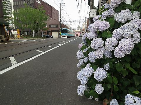 T_t_img_0787